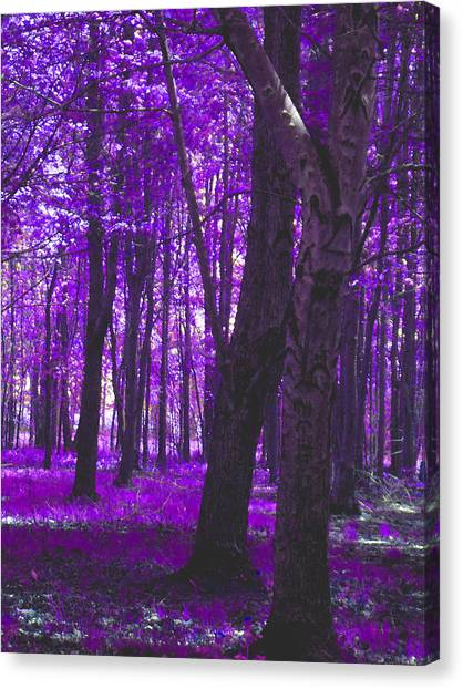 Canvas Print featuring the photograph Artistic Tree In Purple by Michelle Audas