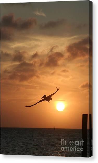 Aruba Pelican II Canvas Print by Paula Deutz