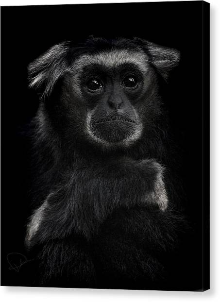 Primates Canvas Print - As Time Goes By by Paul Neville