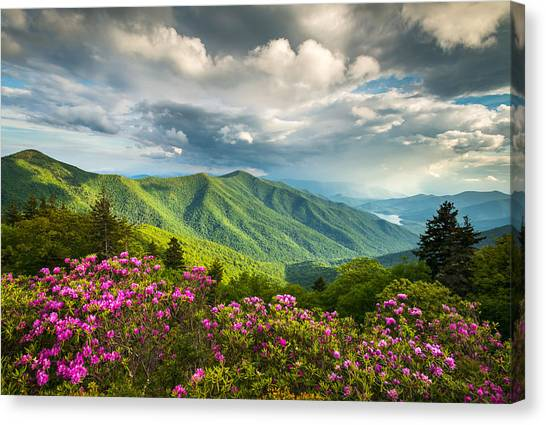 Blue Ridge Parkway Canvas Print - Asheville Nc Blue Ridge Parkway Spring Flowers by Dave Allen