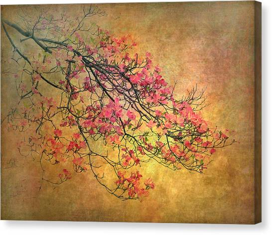 Dogwood Canvas Print - Asian Dogwood by Jessica Jenney
