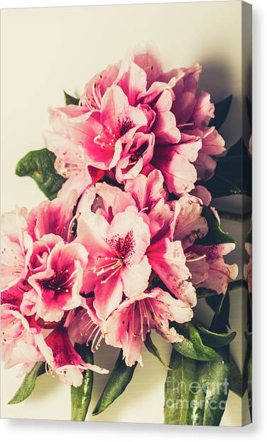 Perennial Canvas Print - Asian Floral Rhododendron Flowers by Jorgo Photography - Wall Art Gallery
