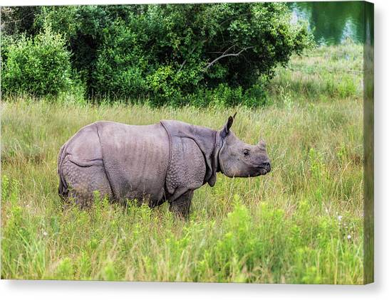 Rhinos Canvas Print - Asian Rhinoceros by Tom Mc Nemar