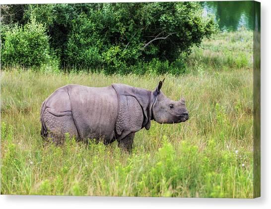 Rhino Canvas Print - Asian Rhinoceros by Tom Mc Nemar