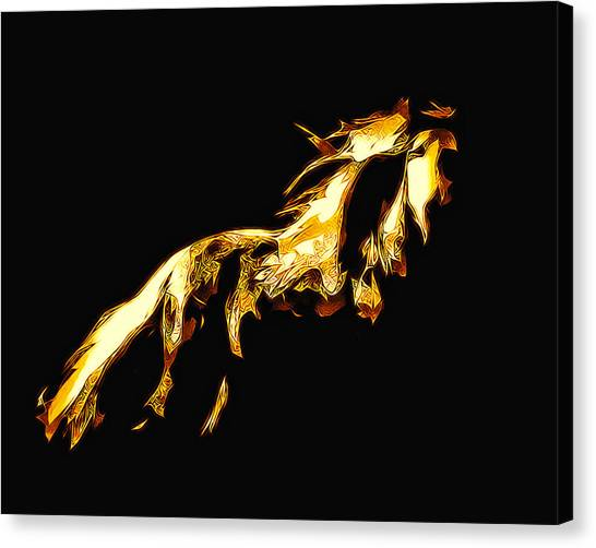 Asian Stallion Canvas Print