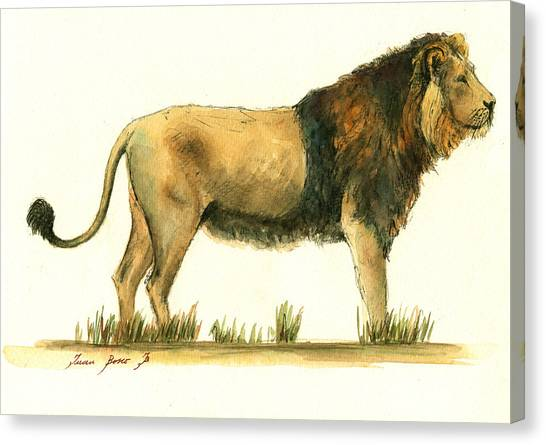 Persians Canvas Print - Asiatic Lion by Juan Bosco