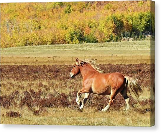 Aspen And Horsepower Canvas Print