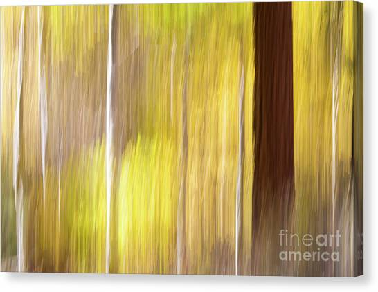 Aspen Blur #1 Canvas Print