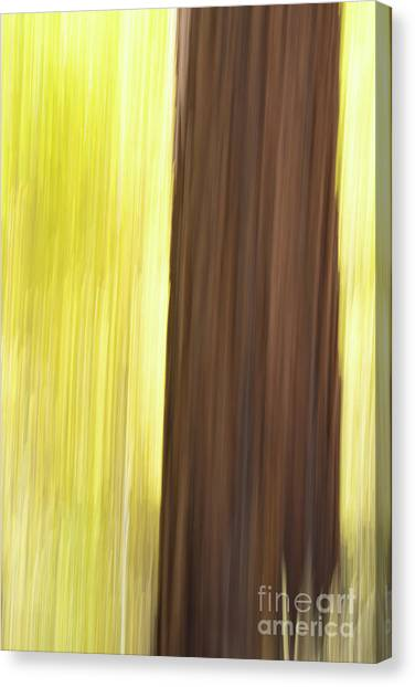 Aspen Blur #4 Canvas Print