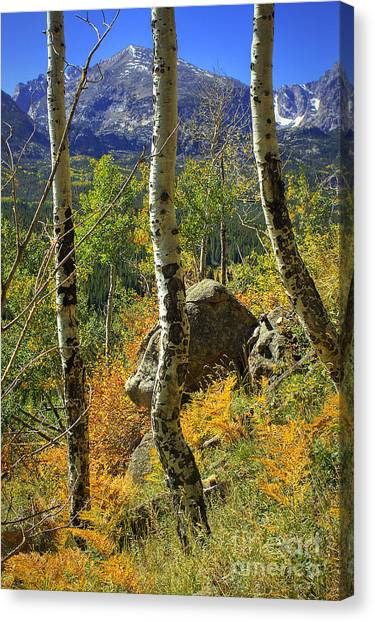 Aspen Curves Canvas Print