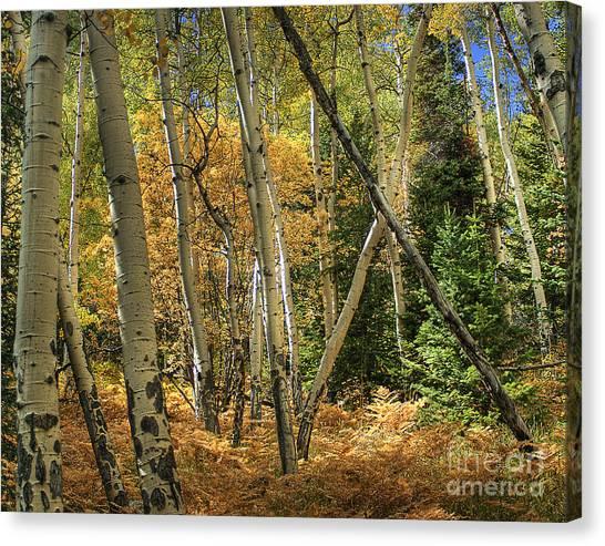 Aspen Ecosystem Canvas Print
