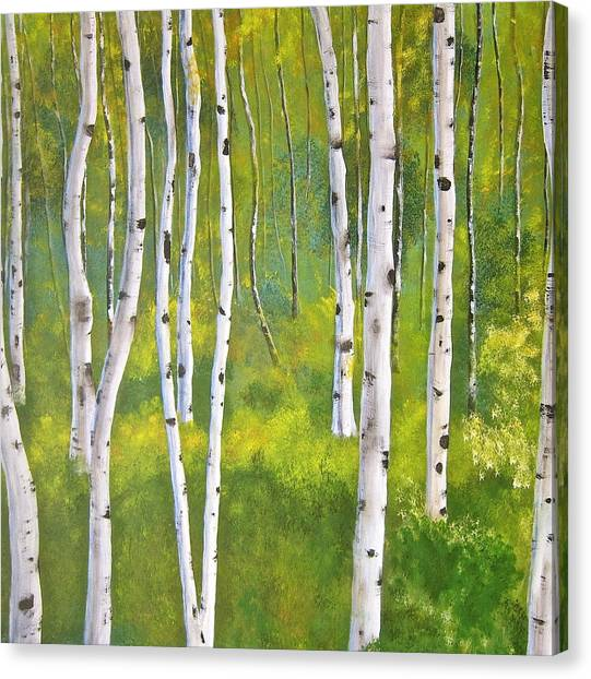 Aspen Forest Canvas Print by Heather Matthews