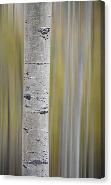 Canvas Print featuring the photograph Aspen by Gary Lengyel