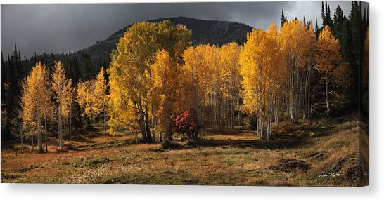Aspen Glow Panorama Canvas Print