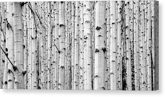 Canvas Print featuring the photograph Aspen Grove by Stephen Holst