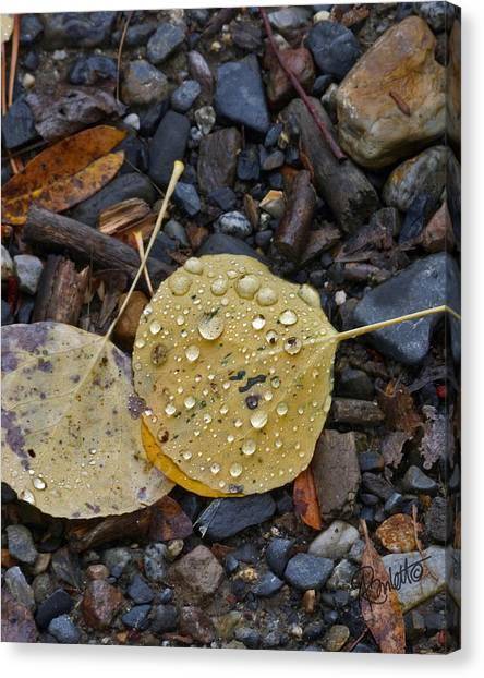 Aspen Leaf Canvas Print