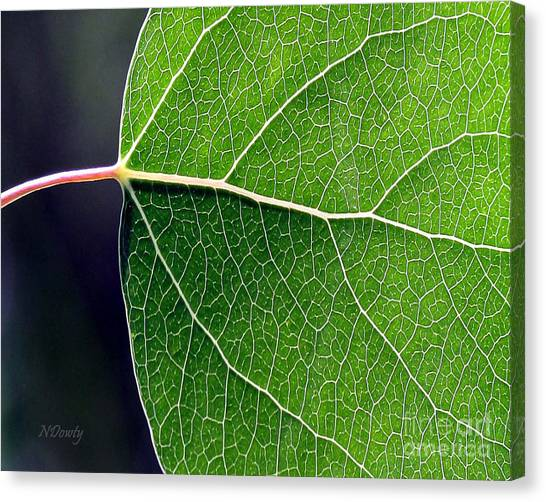 Aspen Leaf Veins Canvas Print