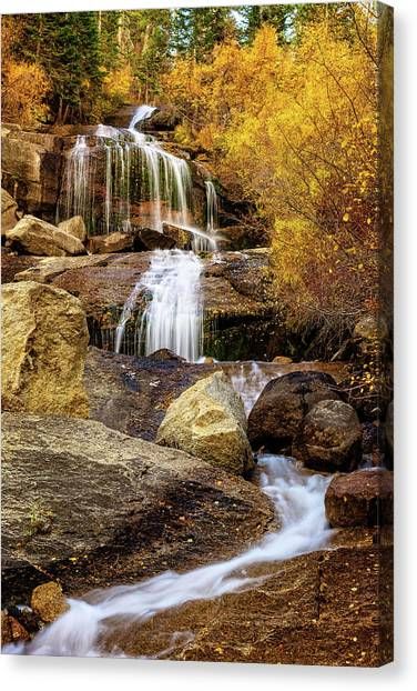 Aspen-lined Waterfalls Canvas Print