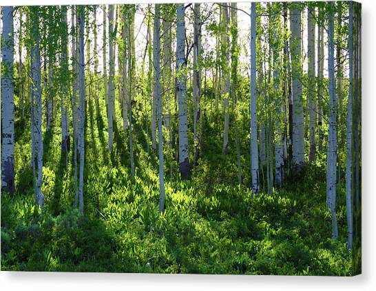 Aspen Morning 1 Canvas Print