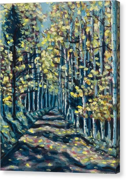 Aspen Path Canvas Print by Steve Lawton