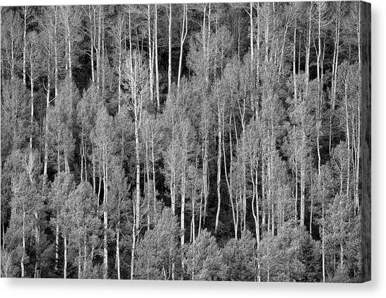 Canvas Print featuring the photograph Aspen Pattern by Denise Bush