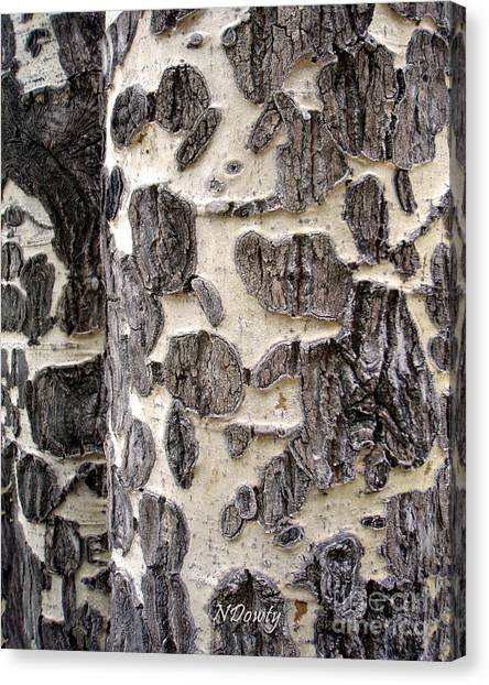 Aspen Scars Canvas Print