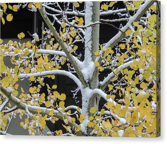 Aspen Snow Canvas Print