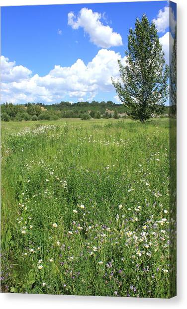 Aspen Tree In Meadow With Wild Flowers Canvas Print