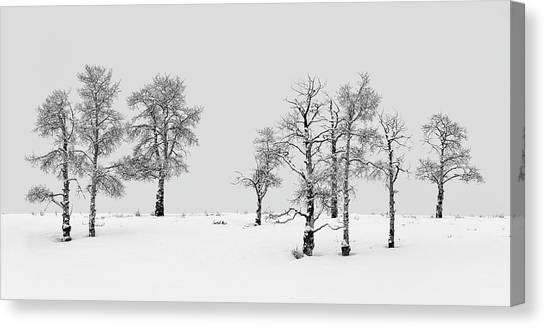 Canvas Print featuring the photograph Aspen Tree Line-up by Denise Bush