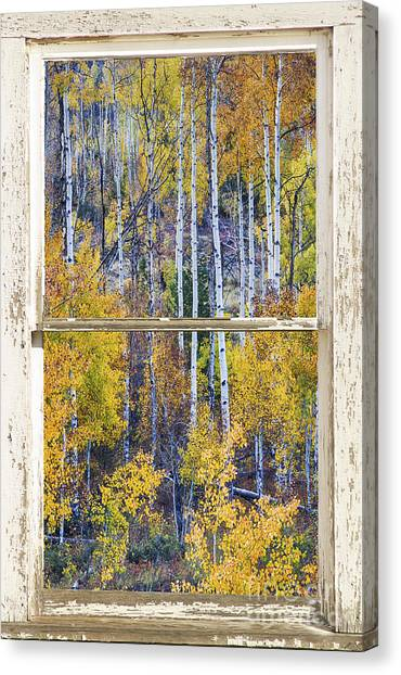 Aspen Tree Magic Cottonwood Pass White Farm House Window Art Canvas Print