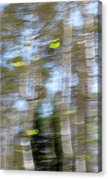 Aspen Twist Canvas Print