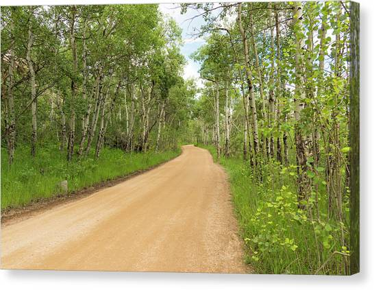 Aspen Way Canvas Print