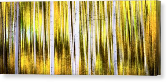 Aspen Wonderland Canvas Print