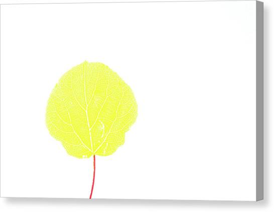 Aspen Yellow Canvas Print
