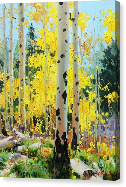 Autumn Scene Canvas Print - Aspens In Golden Light by Gary Kim