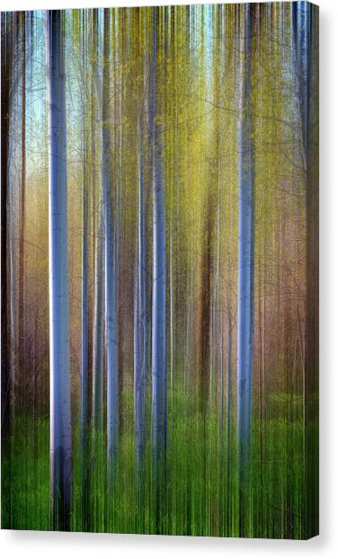 Aspens In Springtime Canvas Print