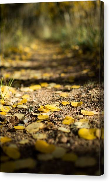 Aspen Leaves On Trail Canvas Print