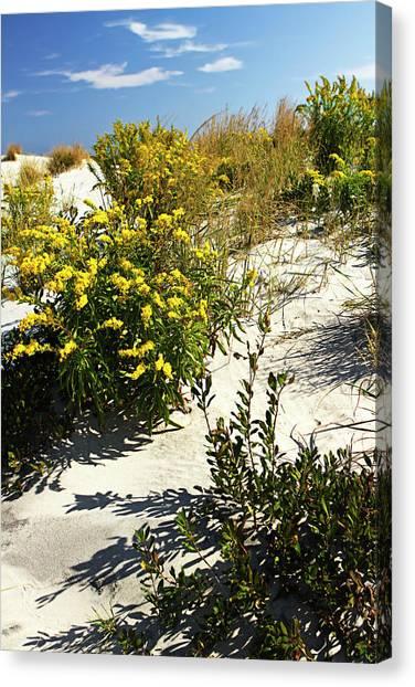 Assateague Beach 5 Canvas Print by Alan Hausenflock