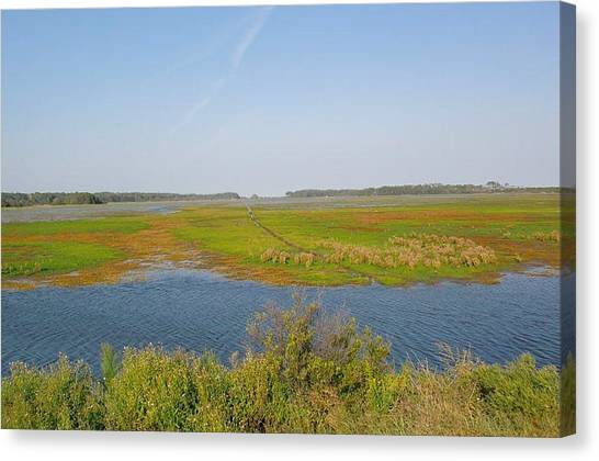 Assateague Island Canvas Print by Gregory Smith