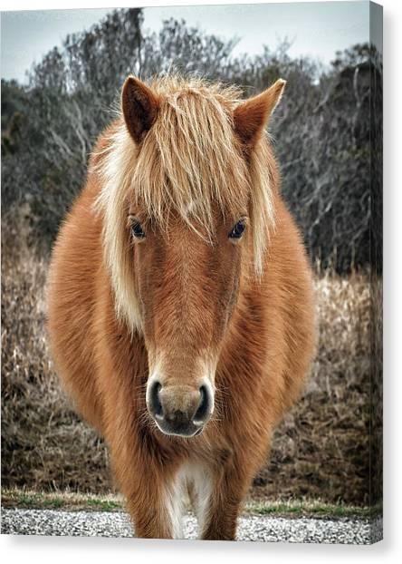 Assateague Island Horse Miekes Noelani Canvas Print