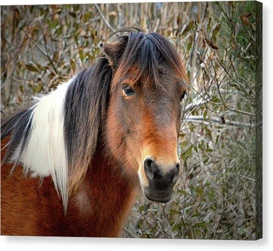 Assateague Island Pony Patricia Irene Canvas Print