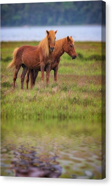 Maryland Horses Canvas Print - Assateague Ponies In The Marsh by Rick Berk
