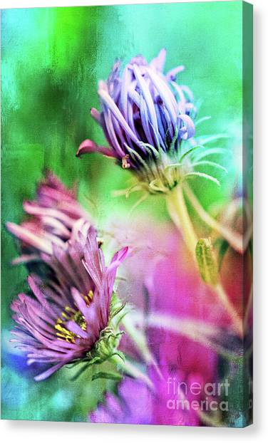 Asters Gone Wild 2 Canvas Print