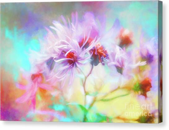 Asters Gone Wild Canvas Print