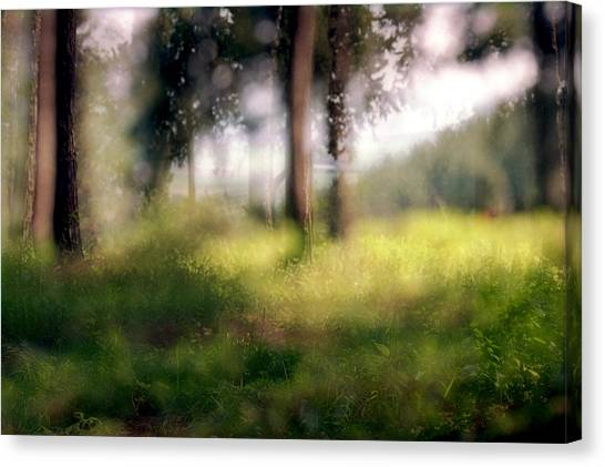 At Menashe Forest Canvas Print