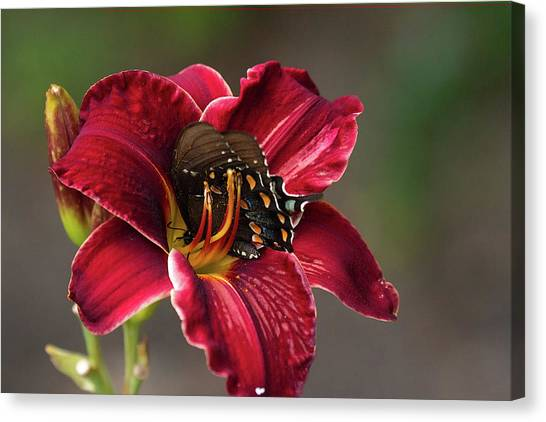 At One With The Orchid Canvas Print