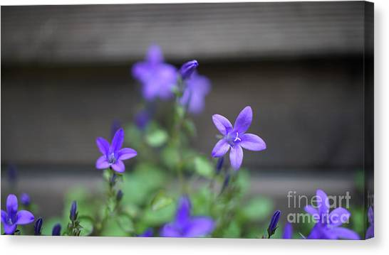 At The Fence Canvas Print