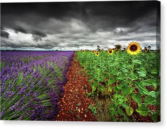 At The Middle Canvas Print