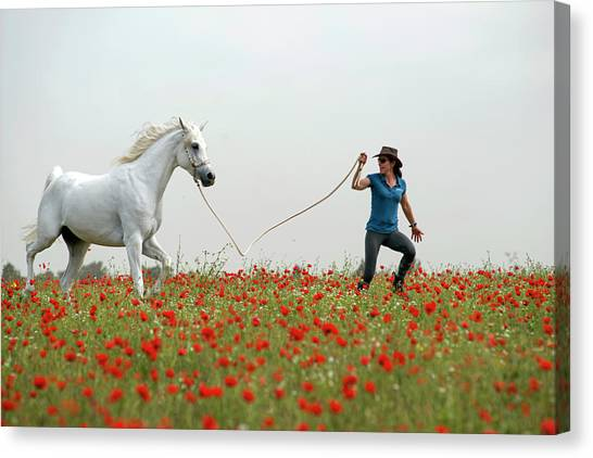 At The Poppies' Field... 2 Canvas Print
