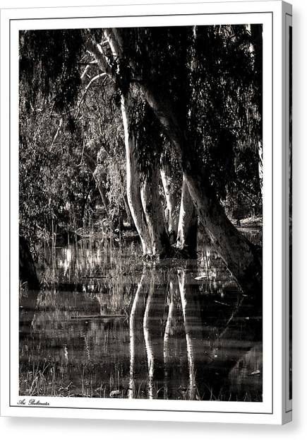 At The Swamp Canvas Print
